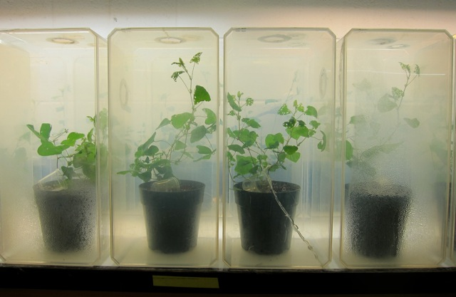 plants in plastic containers
